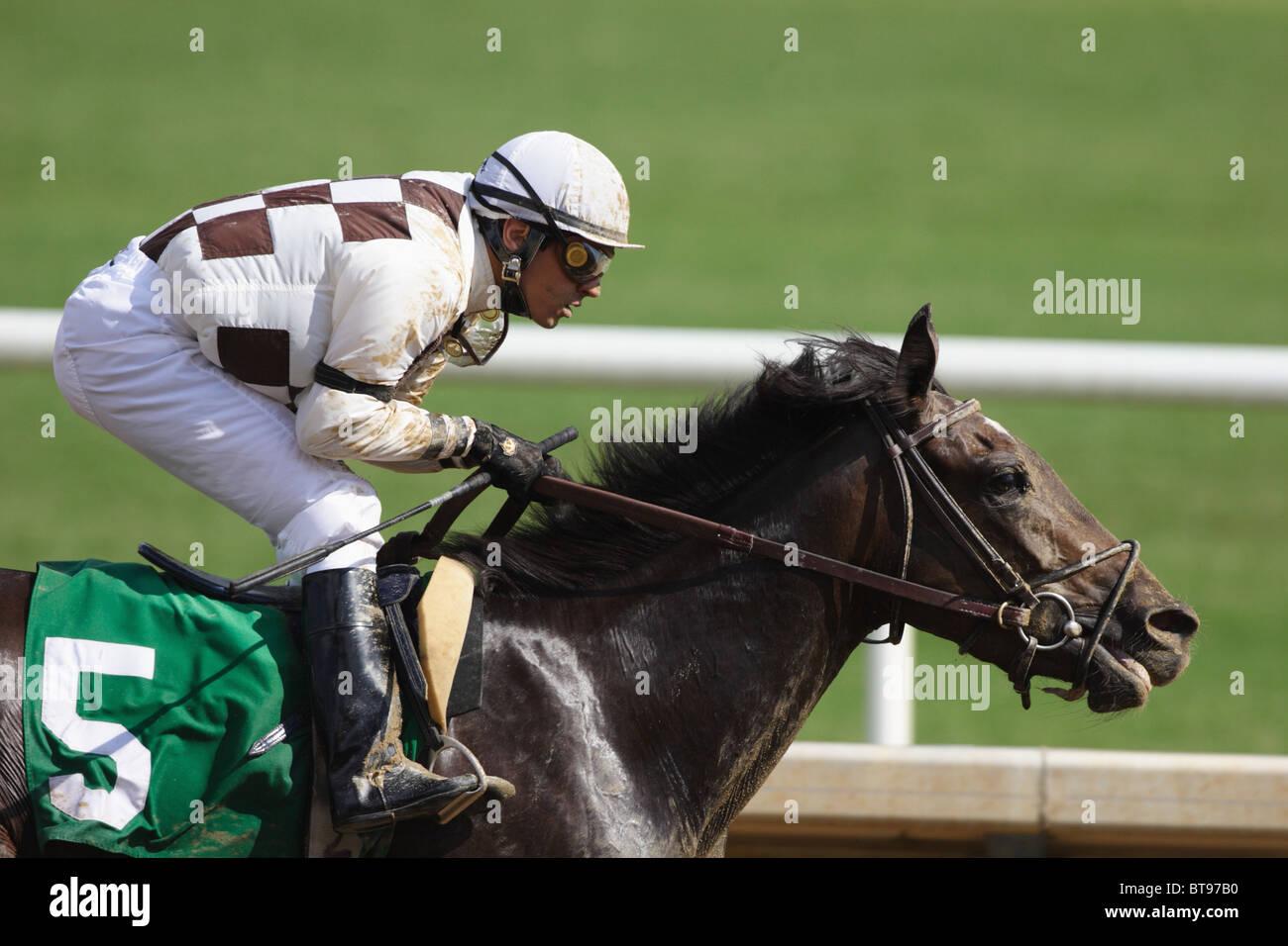 Jockey vincendo gara a Colonial Downs racetrack in New Kent County, Virginia. Luglio 2010 Immagini Stock