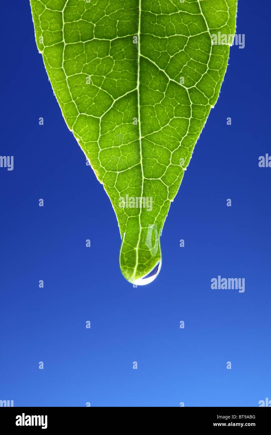 Waterdrop sulla nuova foglia verde Immagini Stock