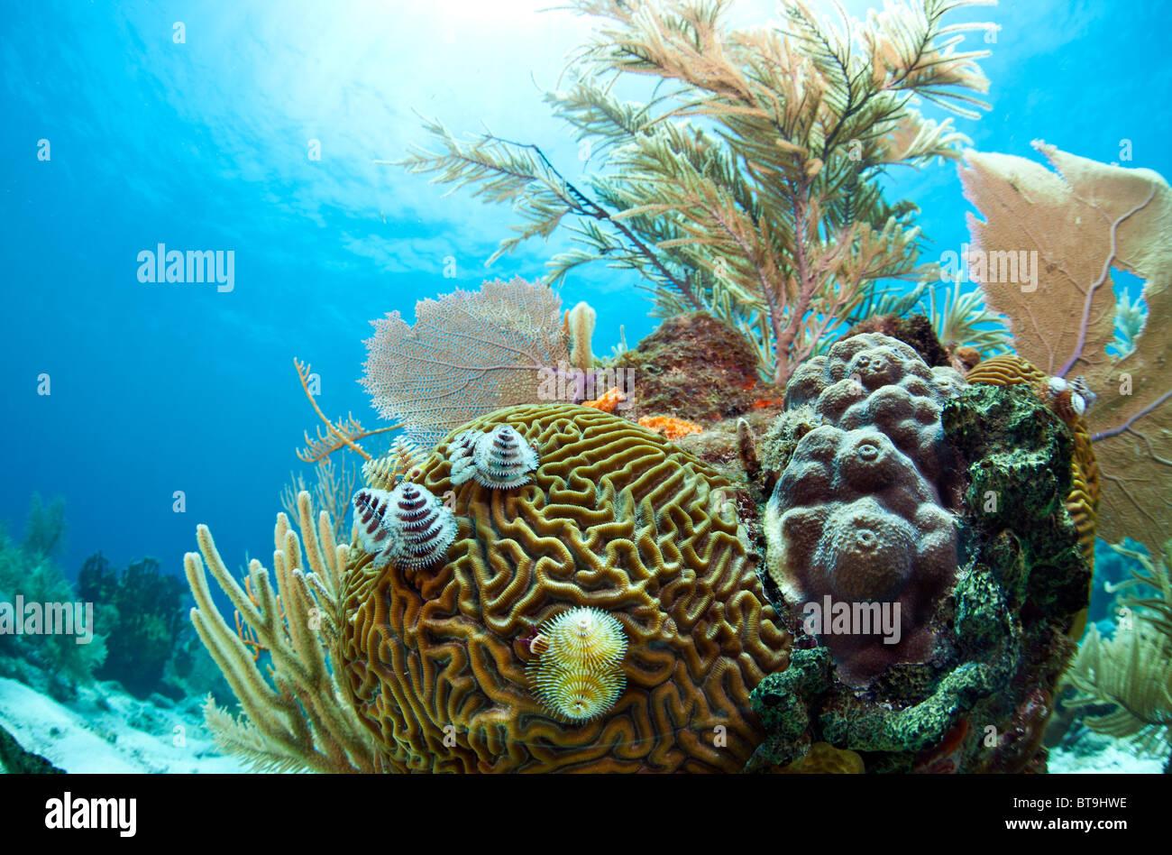 Le barriere coralline al largo della costa di Roatan Honduras Immagini Stock