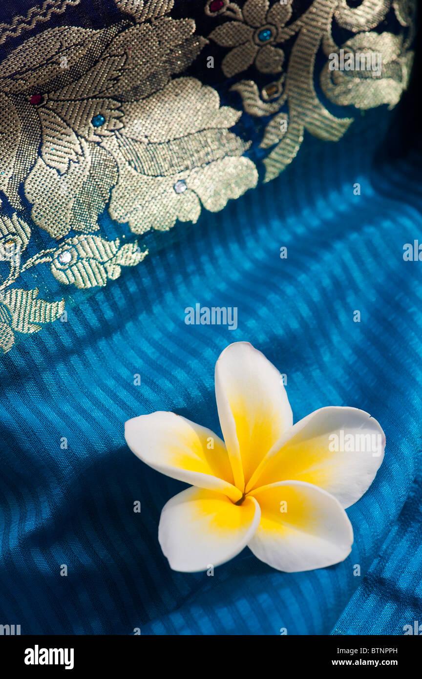 Plumeria. Il Frangipani fiore di seta indiana sari. India Immagini Stock