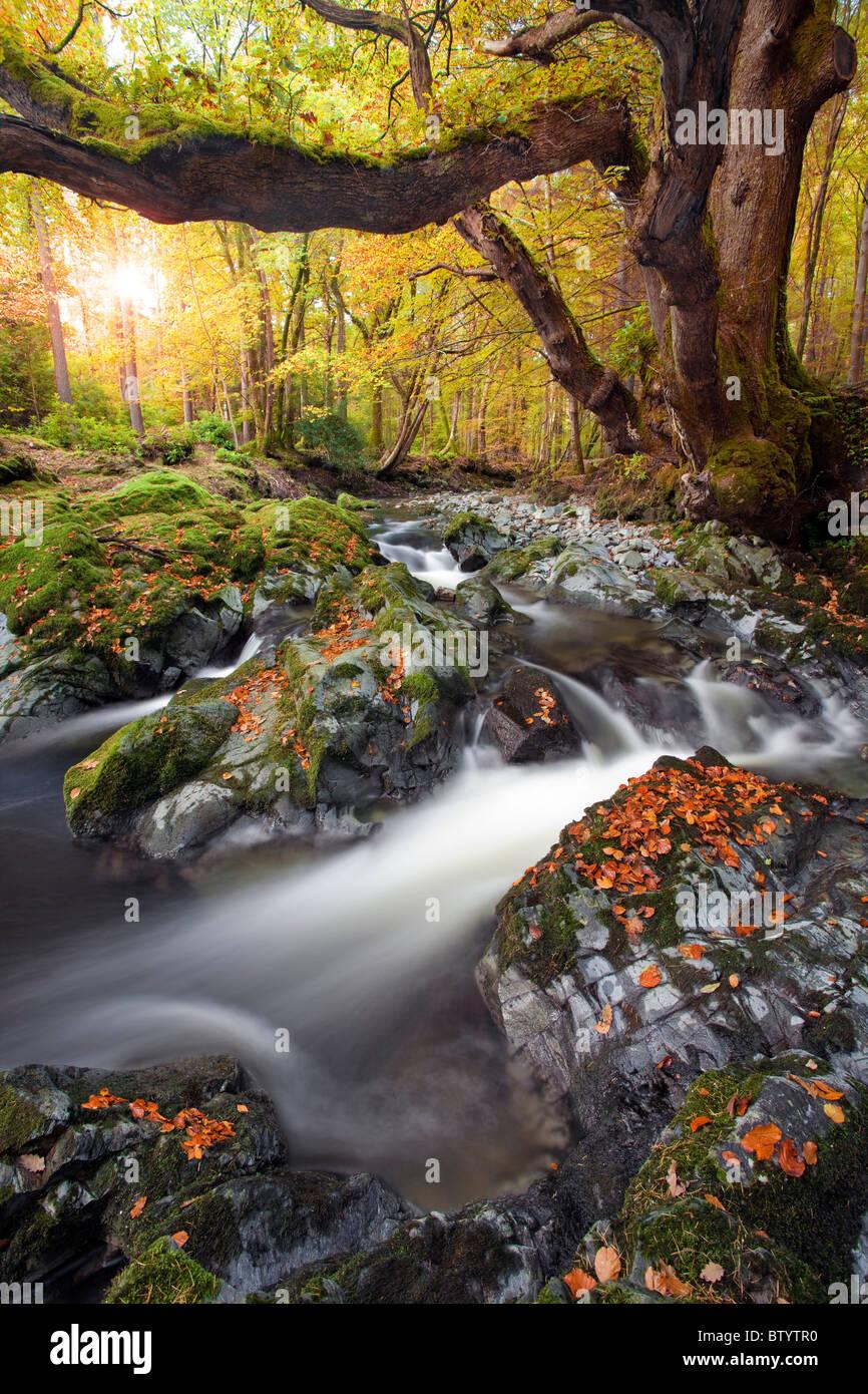 Tollymore Forest park, Irlanda del Nord. Immagini Stock