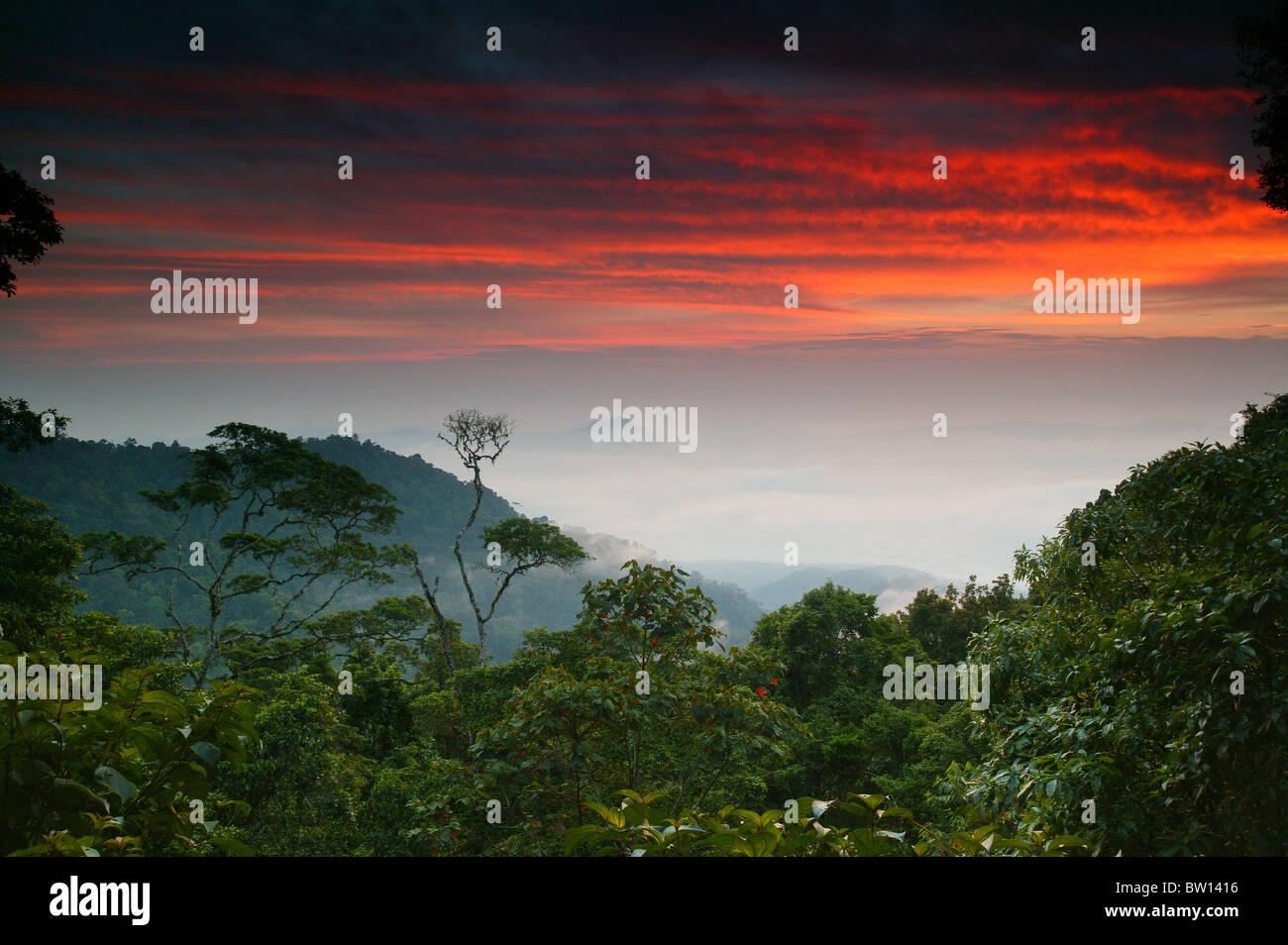 Alba a Cerro Pirre, nel Parco Nazionale del Darién, provincia di Darien, Repubblica di Panama. Immagini Stock
