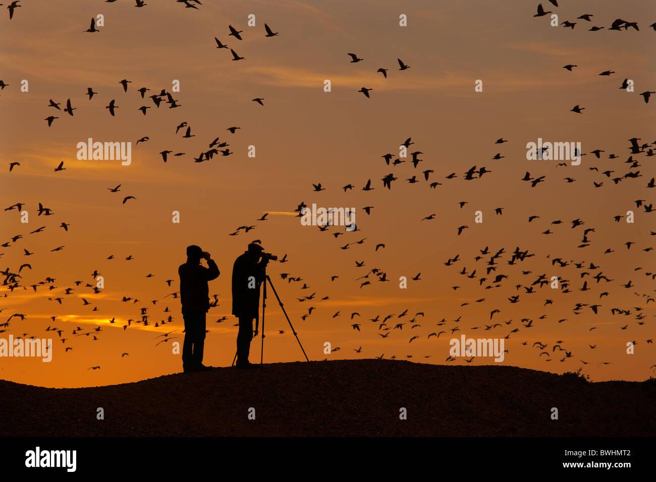 Gli amanti del birdwatching guardare piede rosa oche Anser brachyrhynchus venendo a roost Norfolk al tramonto Immagini Stock