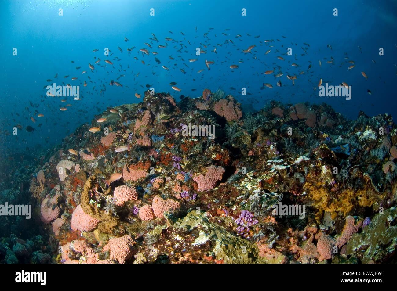 Pesce di mare reef sun coralli marini immersioni isola di for Immagini coralli marini