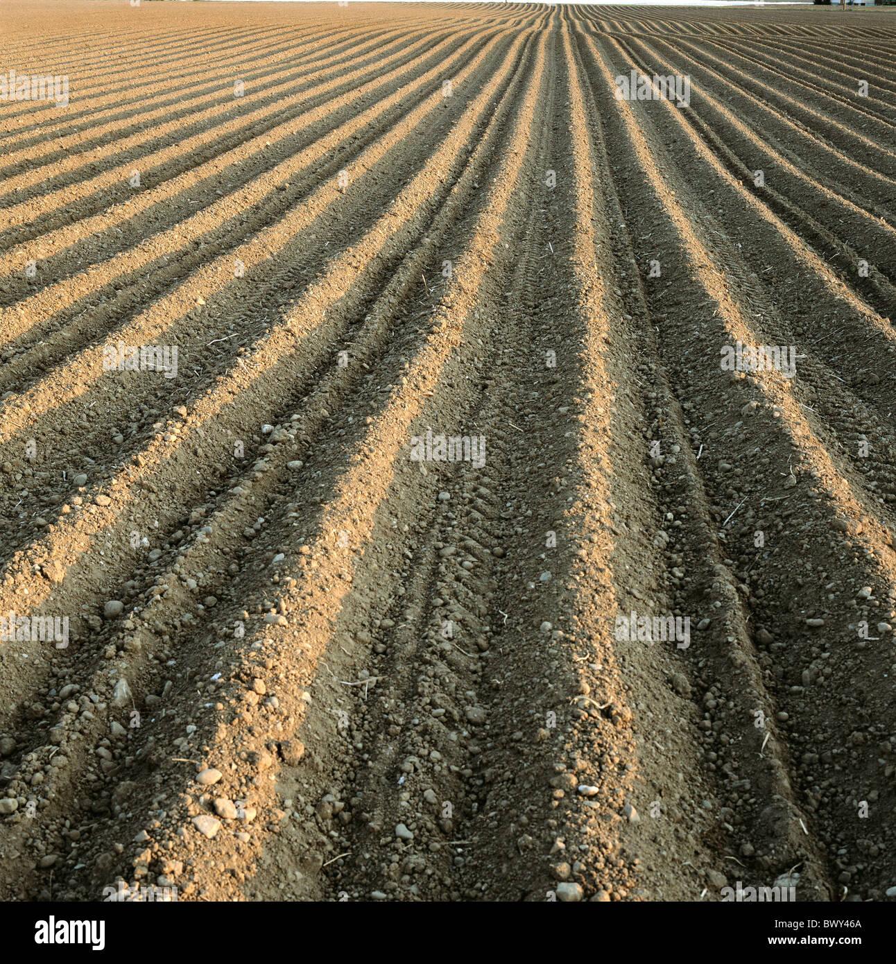 Immagine del campo-Nozione di riempimento molla prospettiva dei solchi Immagini Stock