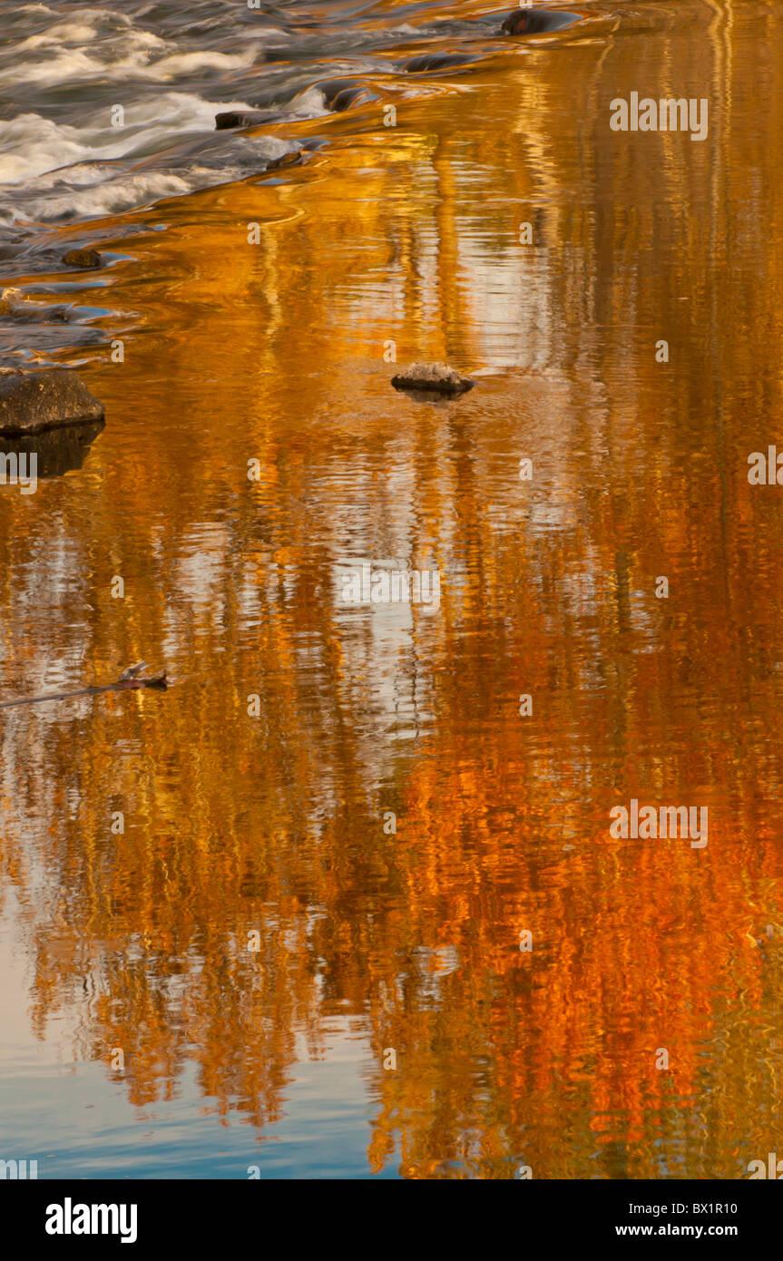 Stati Uniti d'America, Idaho Boise, i colori dell'autunno autunno riflettente alberi nel Fiume Boise, Fiume Immagini Stock