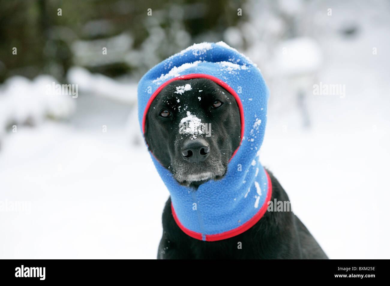 bandana sportiva e casual copricapo collo ghetta passamontagna testa sciarpa Mascherina unisex multifunzionale per il viso con cane di terrier carino su sfondo rosso