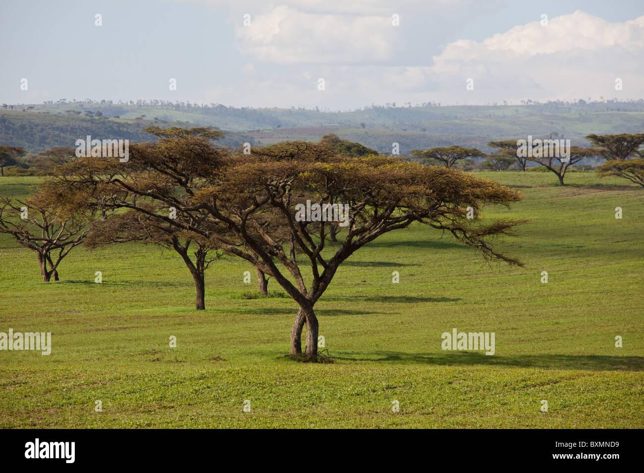 Paesaggi africani. Kenya. Immagini Stock