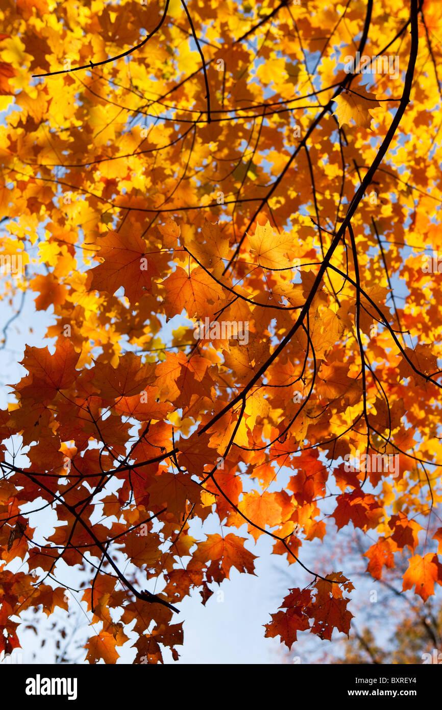 Foglie di autunno sul ramo Immagini Stock