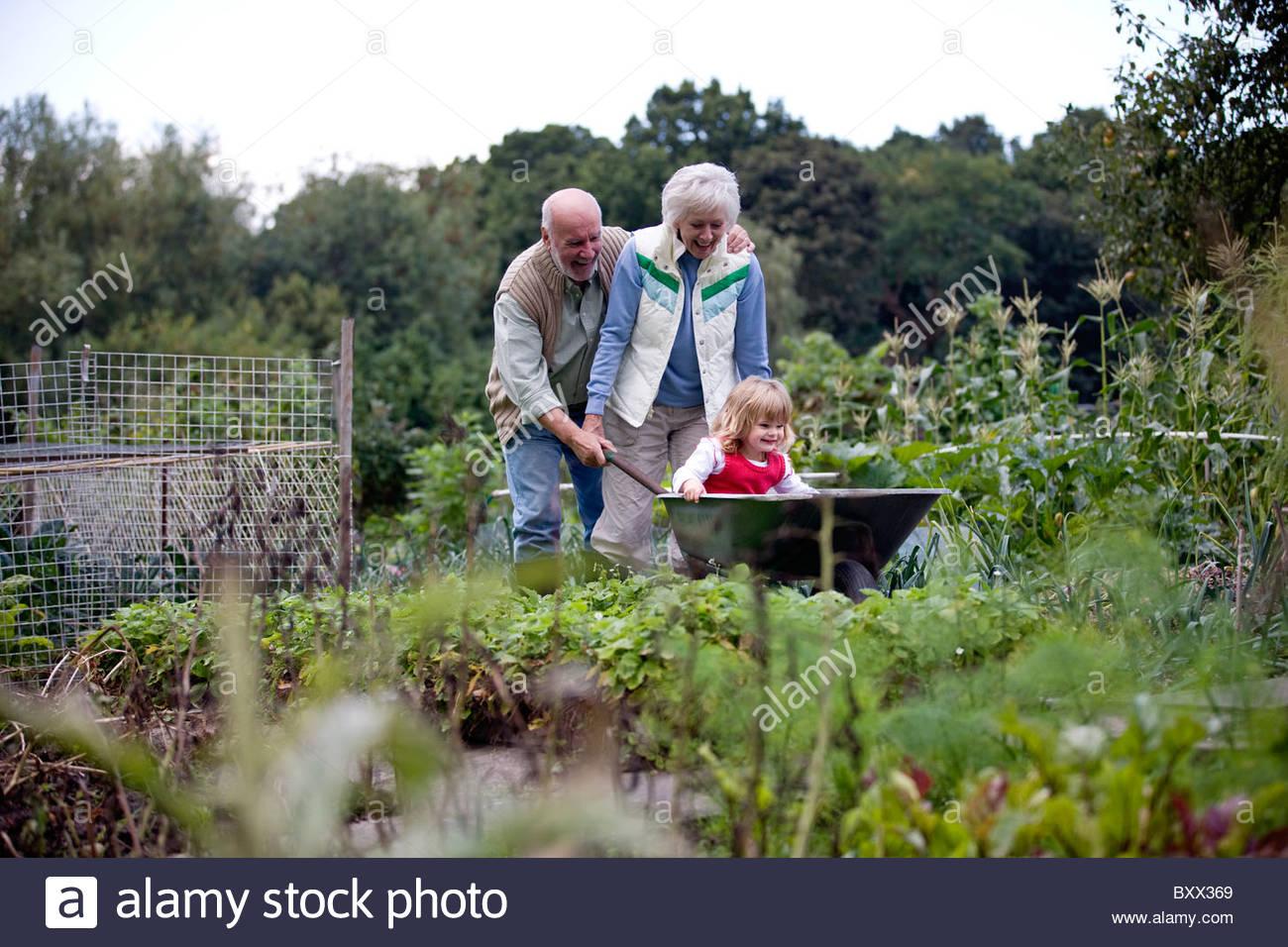 Nonni spingendo il loro nipote in una carriola su un riparto Immagini Stock
