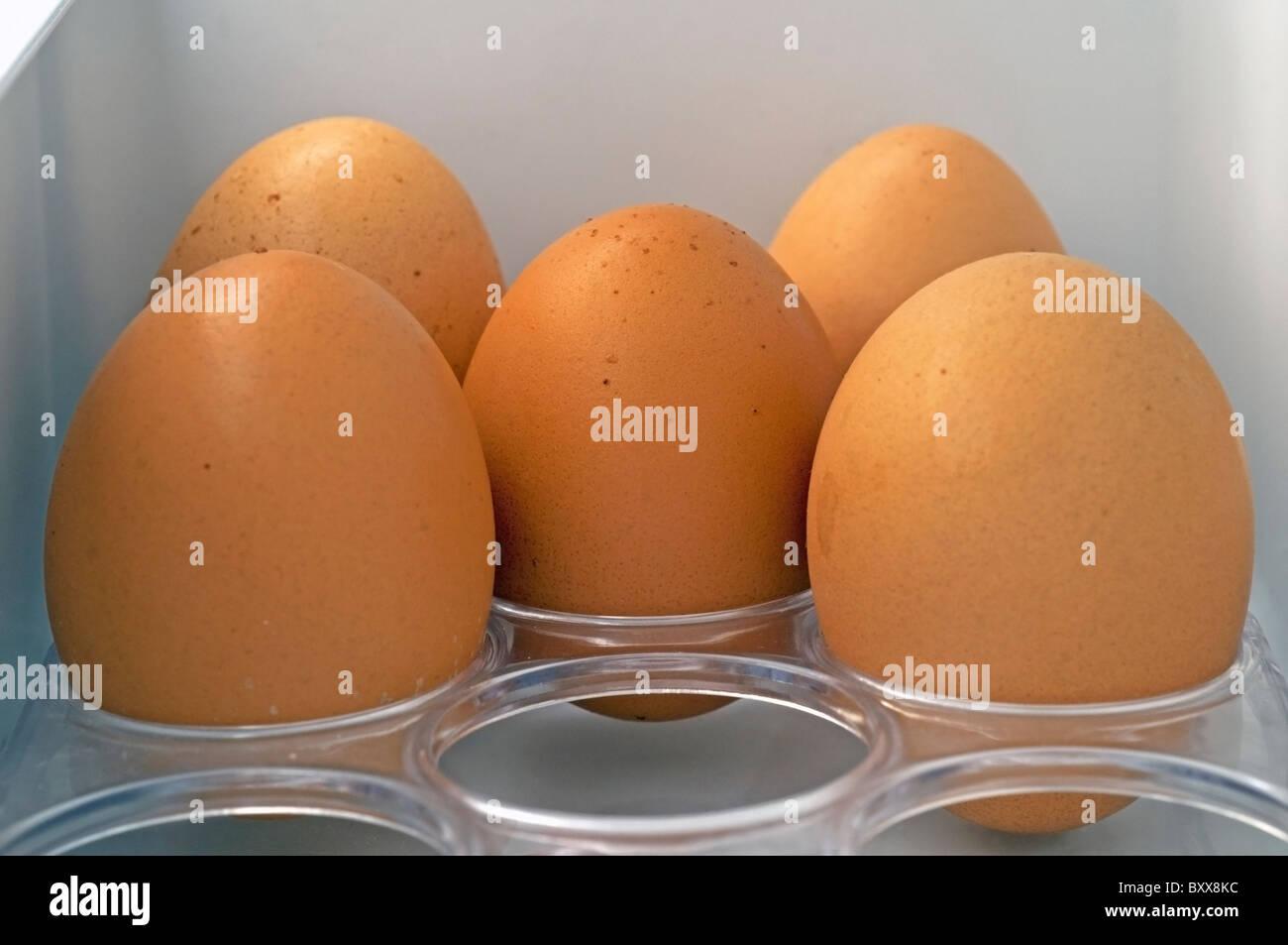 Eggsin frigorifero Immagini Stock
