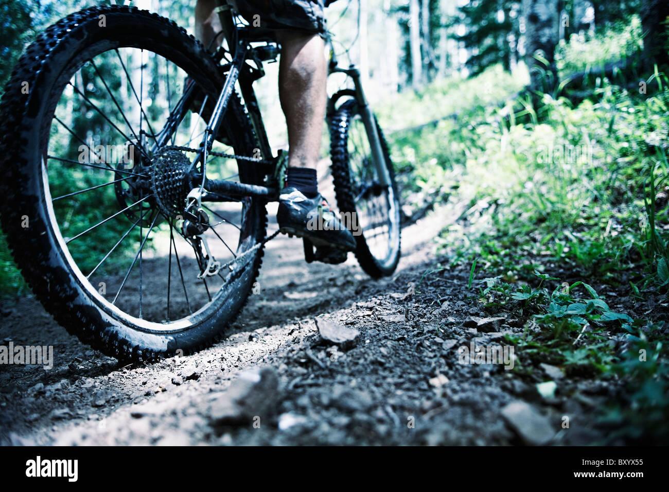 Uomo in mountain bike nella Foresta Immagini Stock