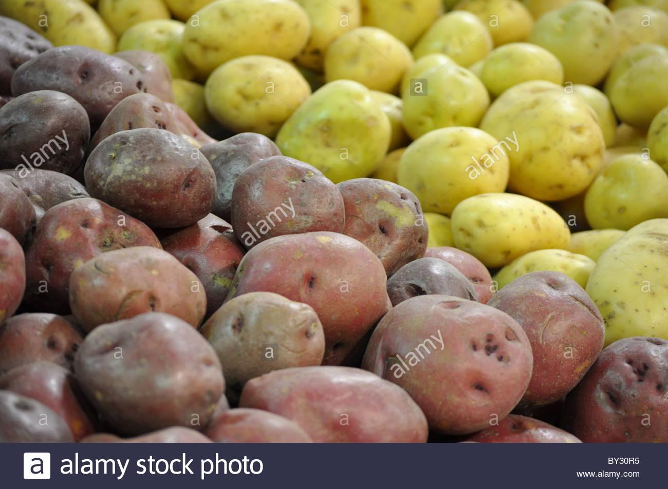 Giallo e rosso patate su un negozio di alimentari Immagini Stock