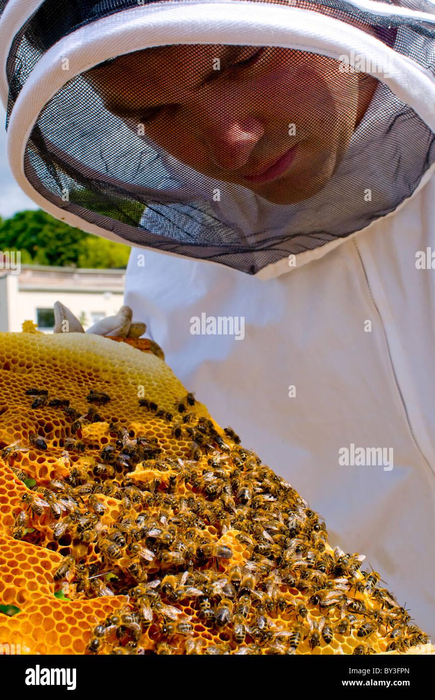 Apicoltore Honeybees Apis mellifera (modello rilasciato) Immagini Stock