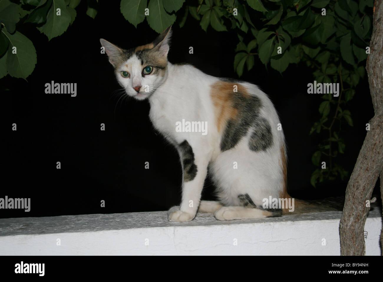 Gatto seduto sul muro Foto Stock