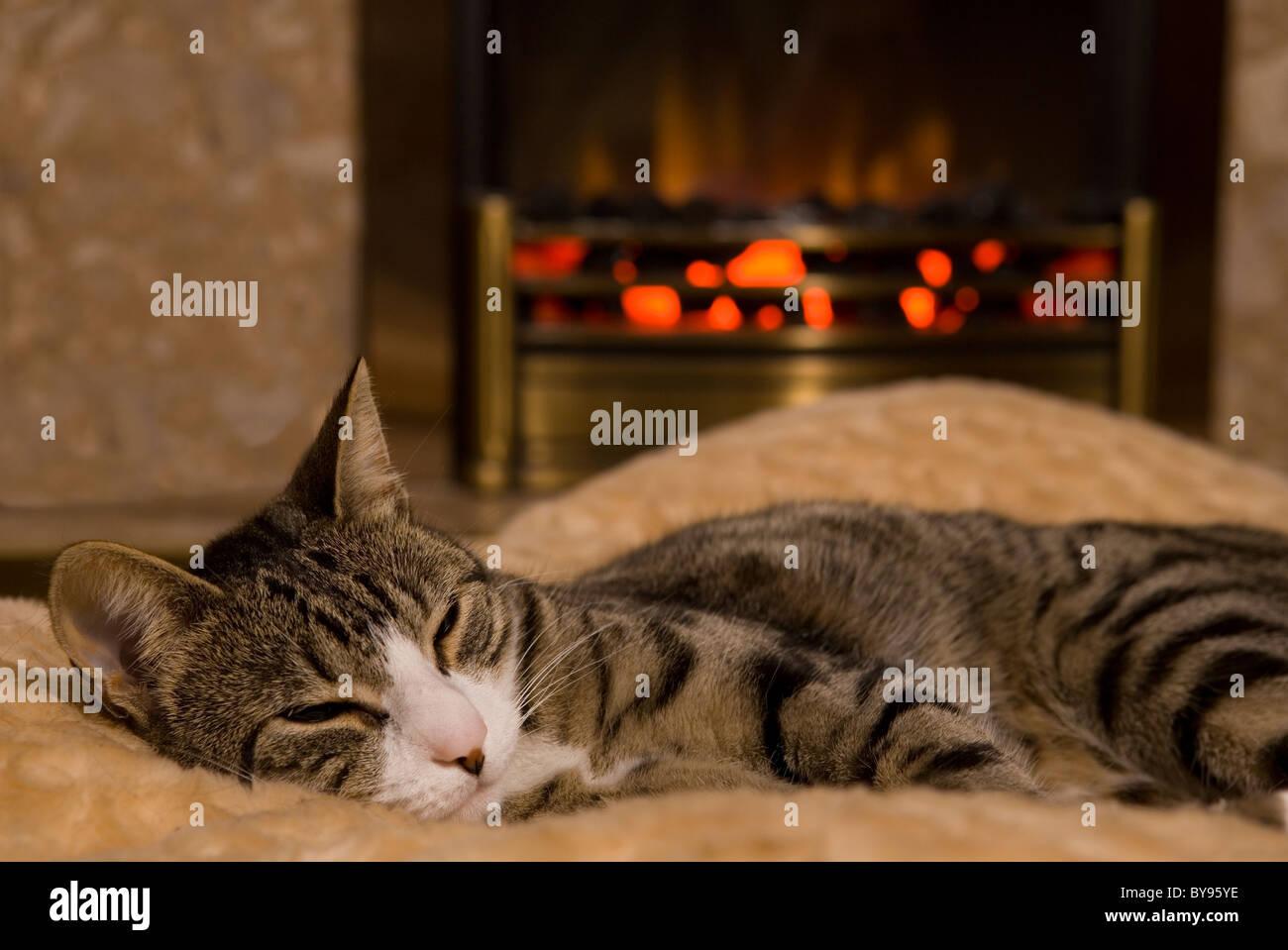 Gatto dorme da fuoco unica femmina adulta moggy cat in ambienti interni Immagini Stock