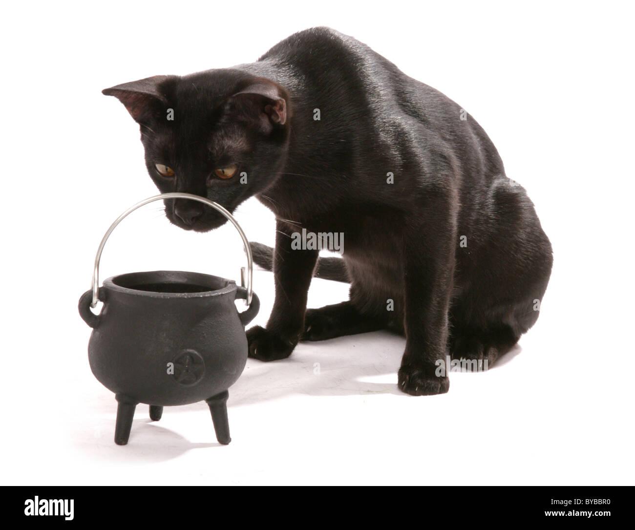 caldo nero micio scopata