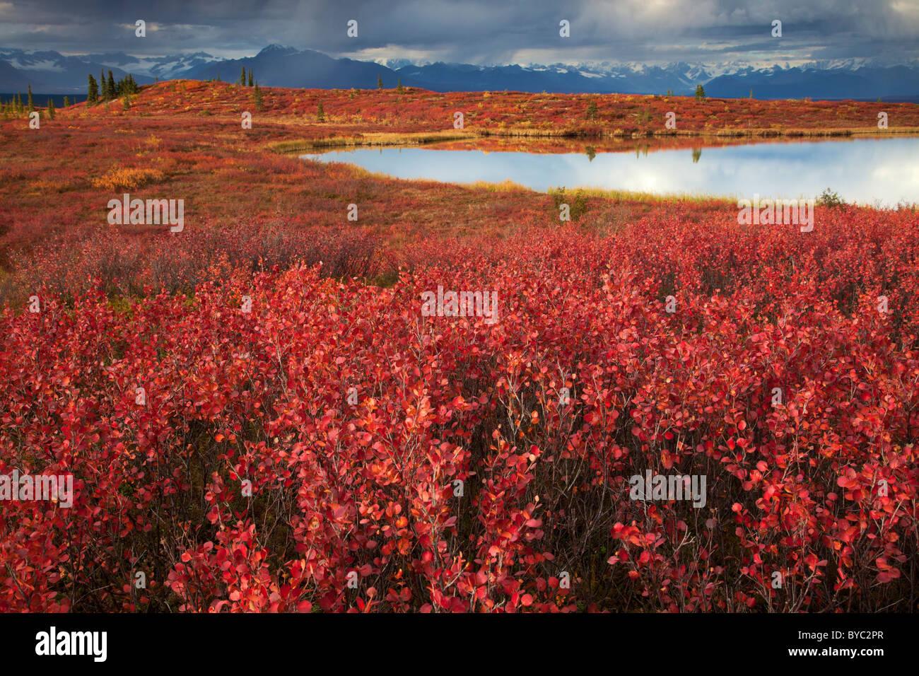 Denali Highway, Alaska. Immagini Stock