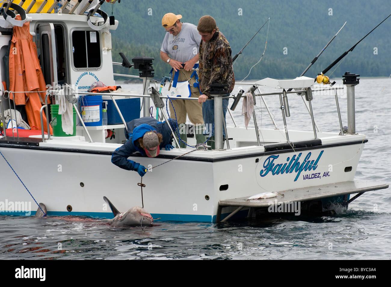Charter di pesca ricreativa barca porta un salmone, squalo Lamna ditropis, Porto Fidalgo, Prince William Sound, Immagini Stock