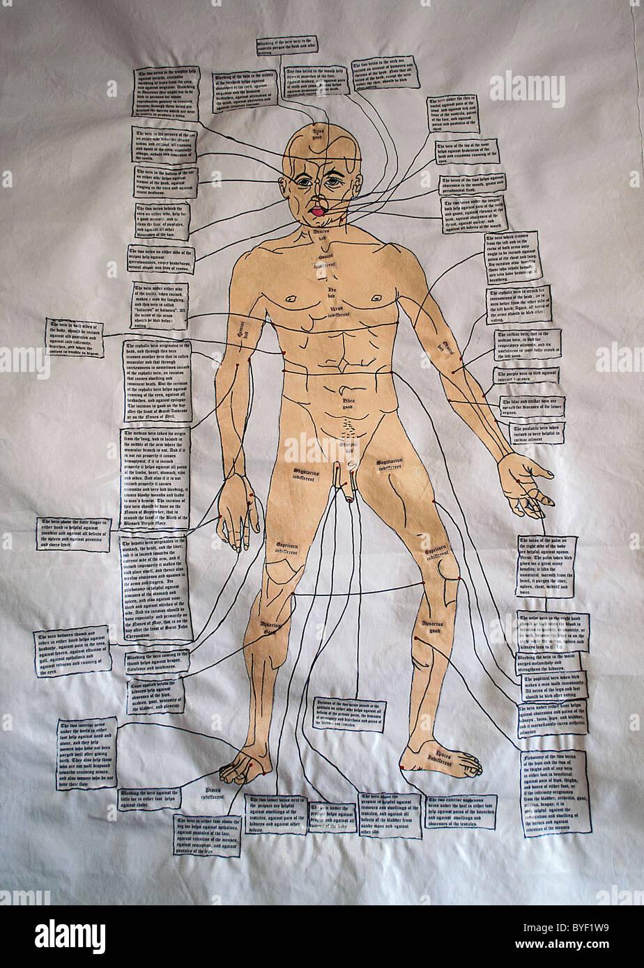 Diagrammi medievale dell'anatomia umana Immagini Stock