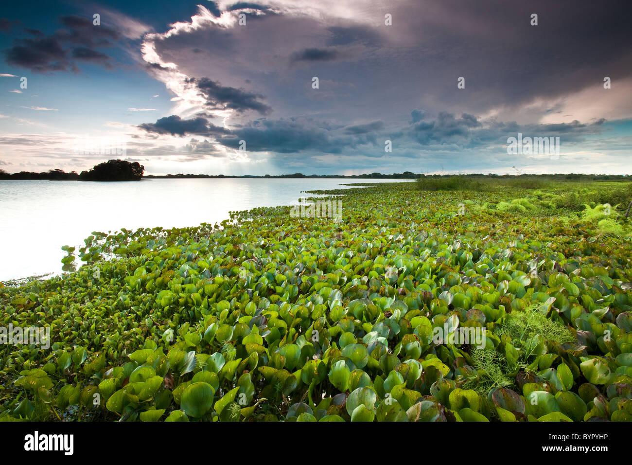 A Lago di Refugio de vida Silvestre Cienaga de las Macanas Riserva, in Herrera provincia, Repubblica di Panama. Foto Stock