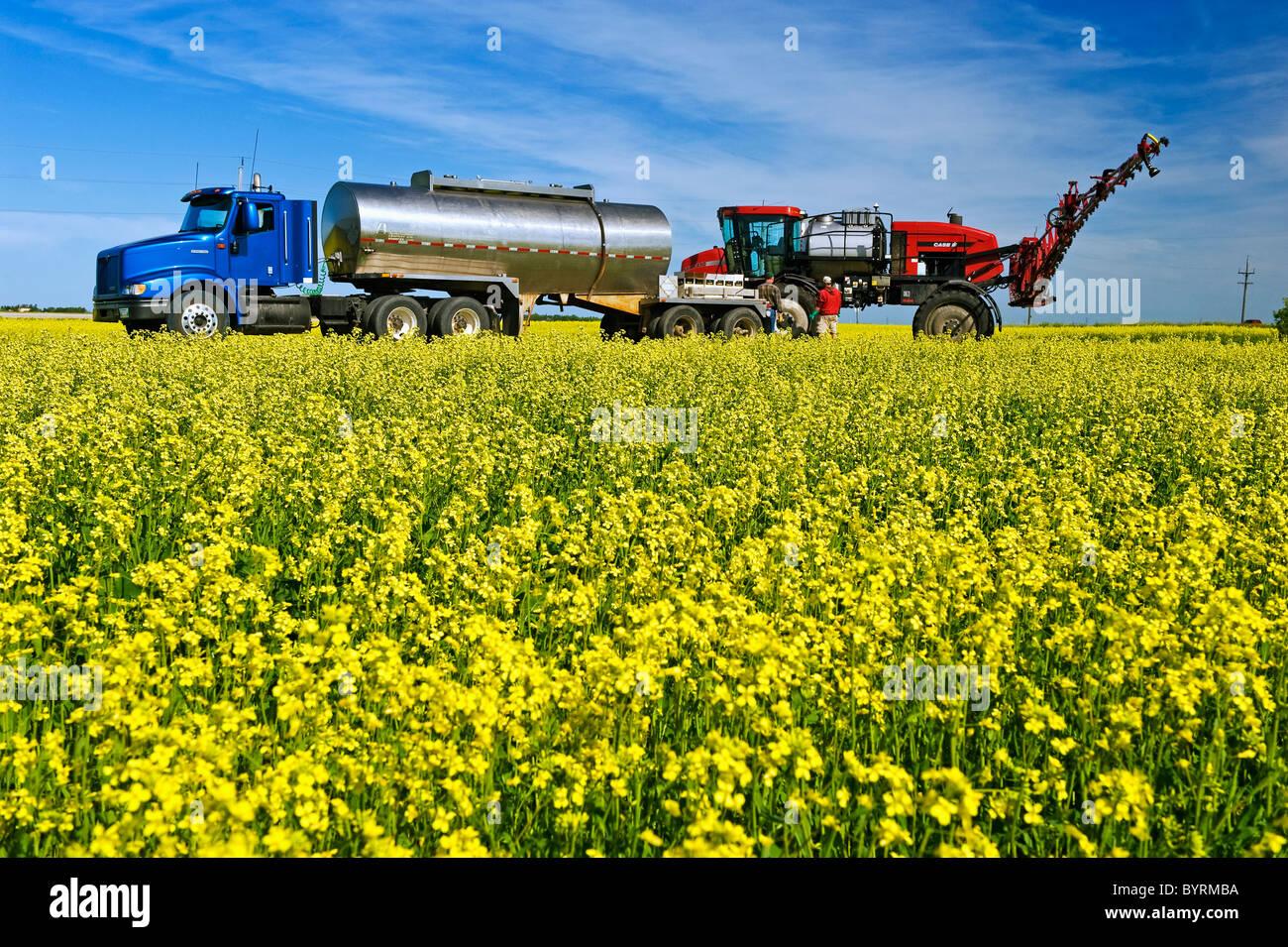 Un agricoltore carichi il suo gioco alto irroratrice con azione fungicida e acqua a spruzzo una fioritura di raccolto Immagini Stock