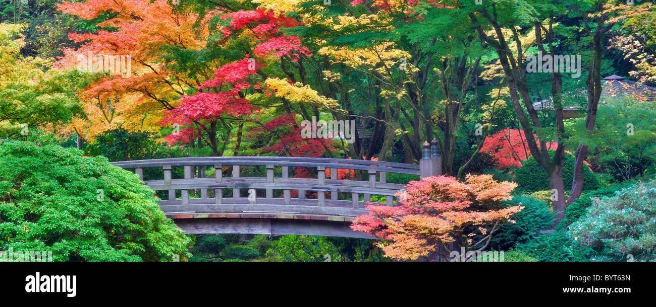Portland giardini Giapponesi con il ponte e i colori dell'autunno. Oregon Immagini Stock