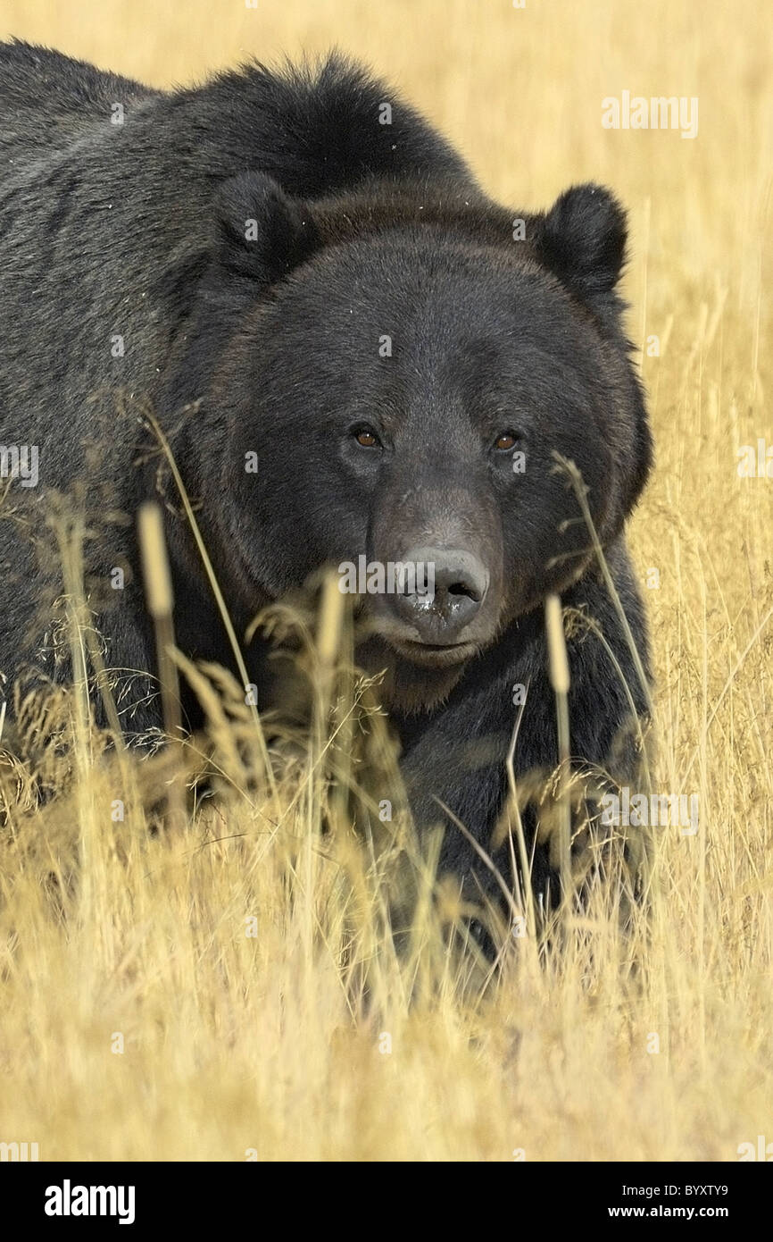 Parks immagini parks fotos stock alamy for Affitti cabina grande lago orso