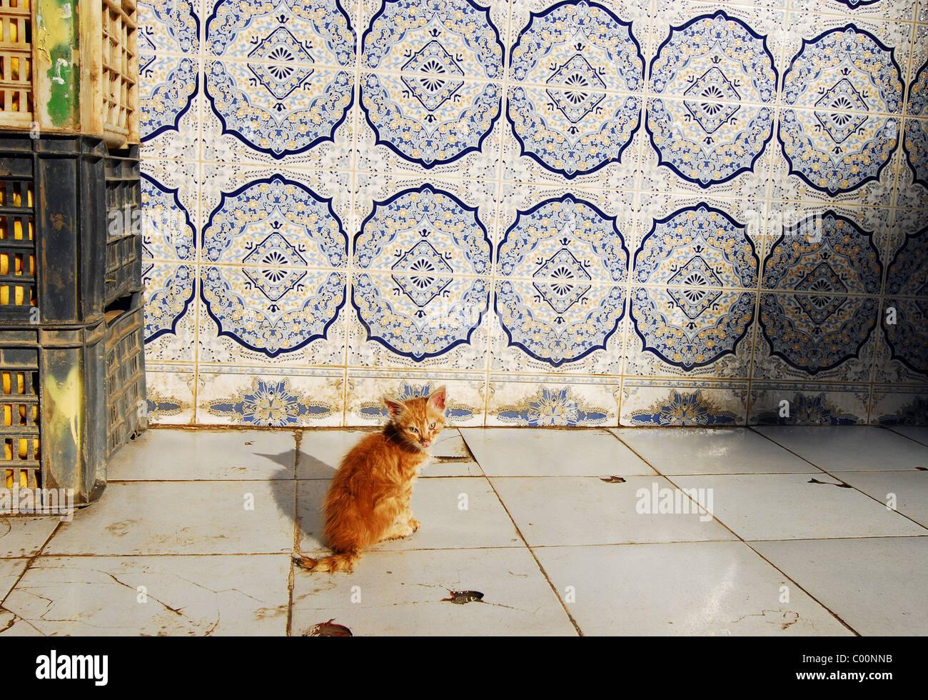 Algeria algeri gattino seduto sul pavimento di piastrelle da