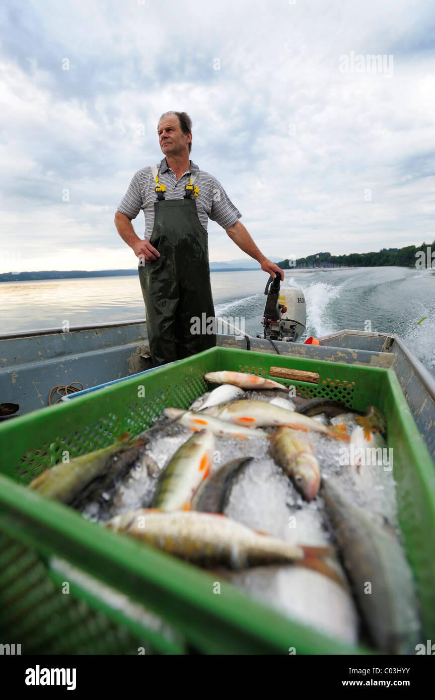 Il pescatore Johann Strobl casting per pescare sul Lago di Starnberg, area Fuenfseenland, Alta Baviera, Baviera, Immagini Stock