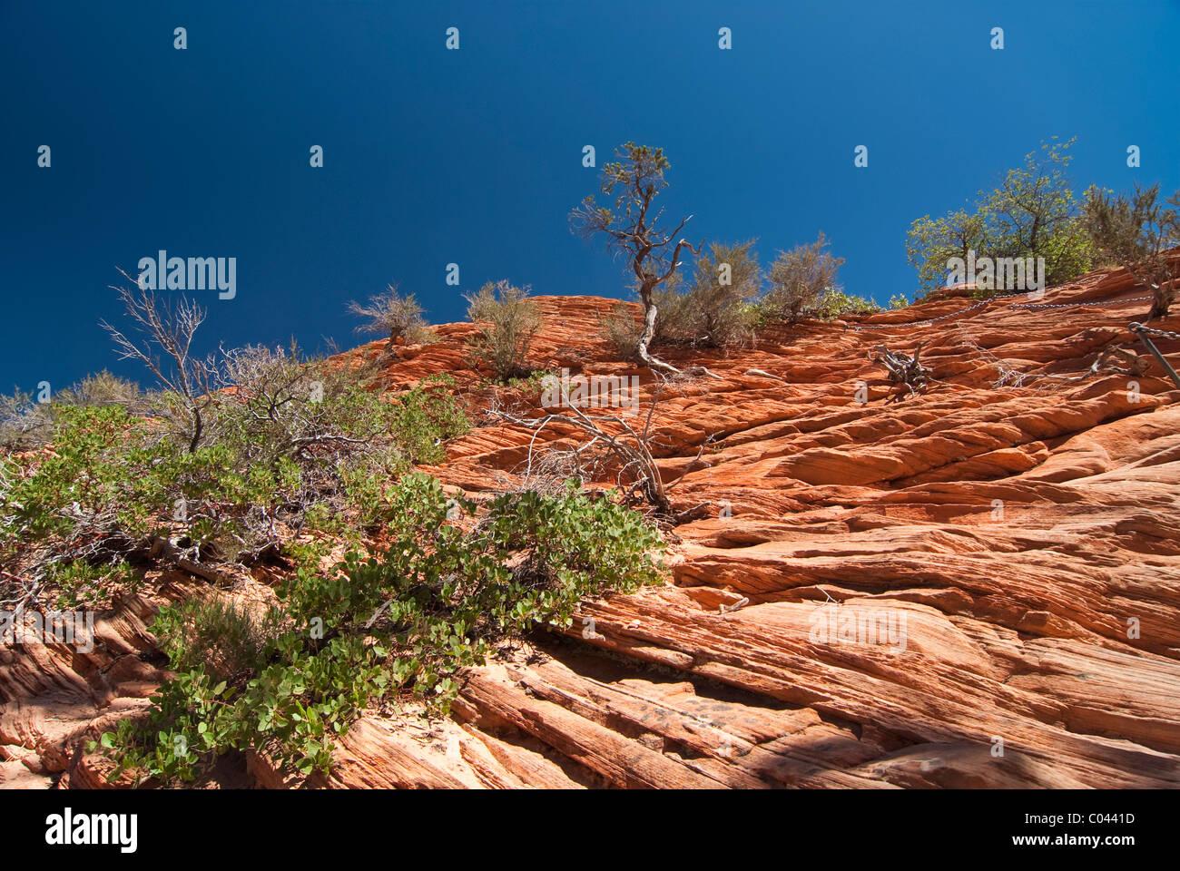 Colorate formazioni rocciose lungo Angel's Landing trail nel Parco Nazionale di Zion, Utah Immagini Stock