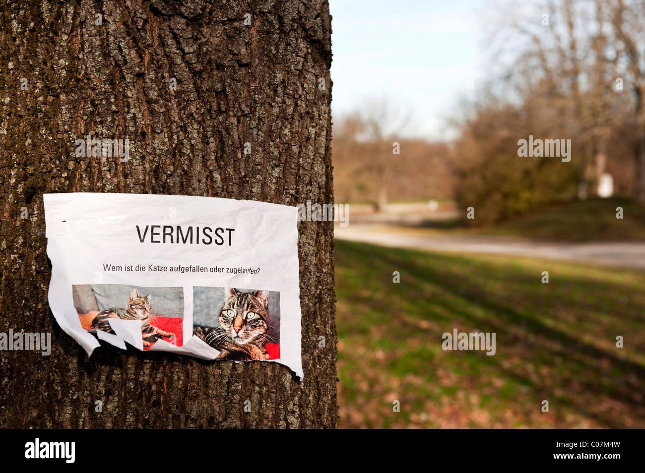 Pezzo di carta attaccato a un albero, cat mancante, in lingua tedesca Immagini Stock