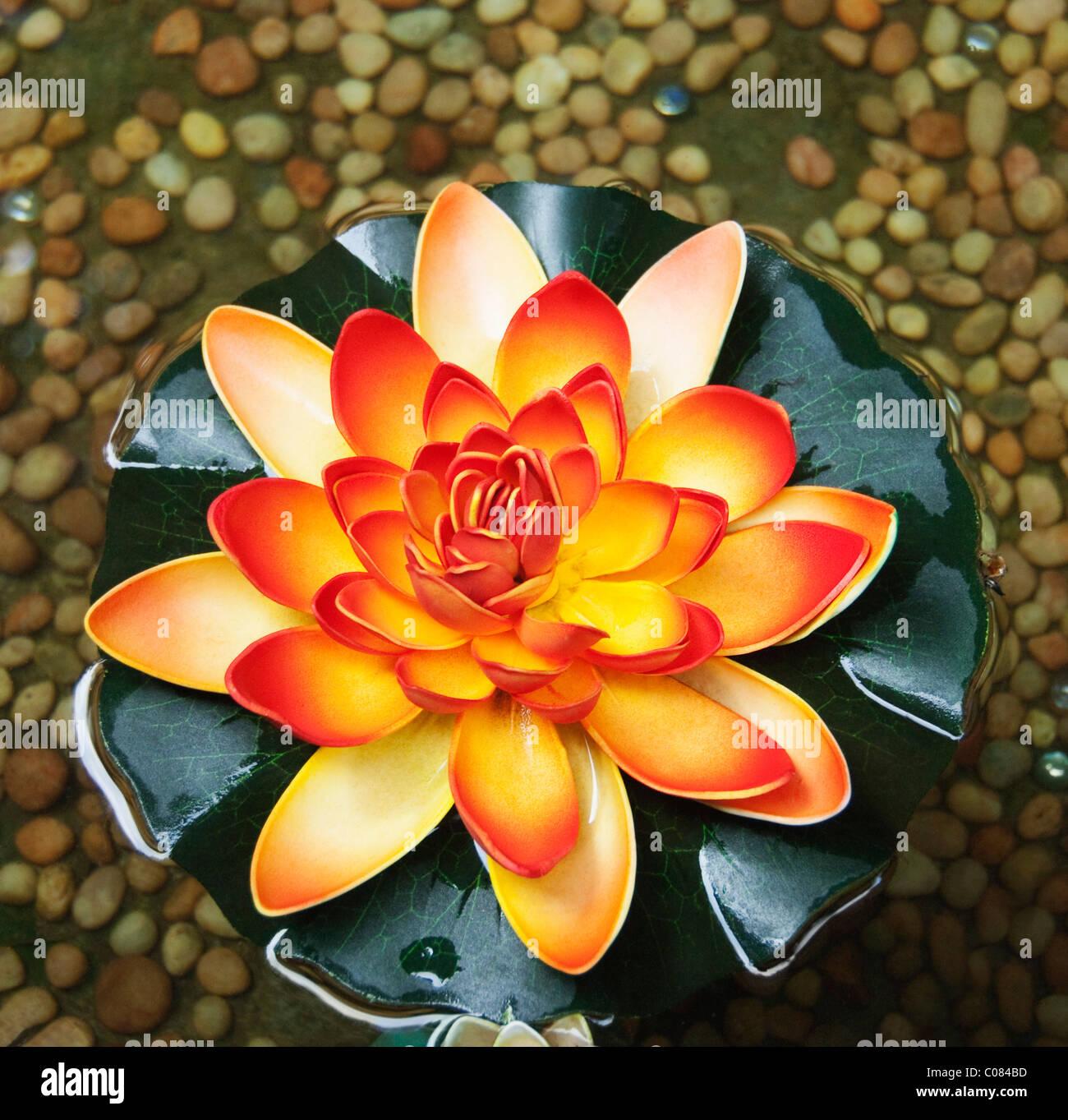 Angolo di alta vista di un fiore di loto, Tirupati, Andhra Pradesh, India Foto Stock