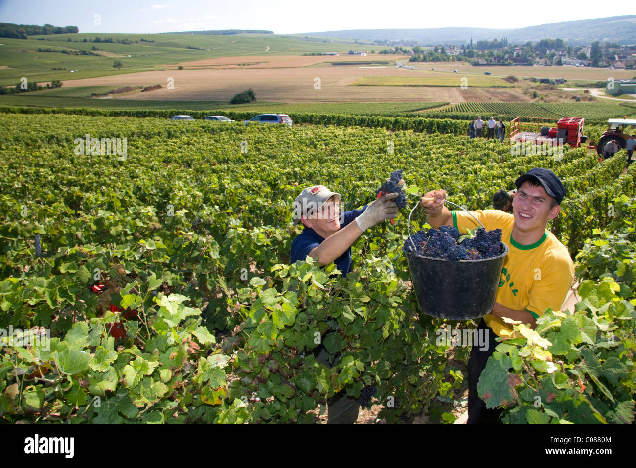 Lavoratori raccolta a mano le uve provenienti da un vigneto nella Champagne provincia del nord-est della Francia. Immagini Stock