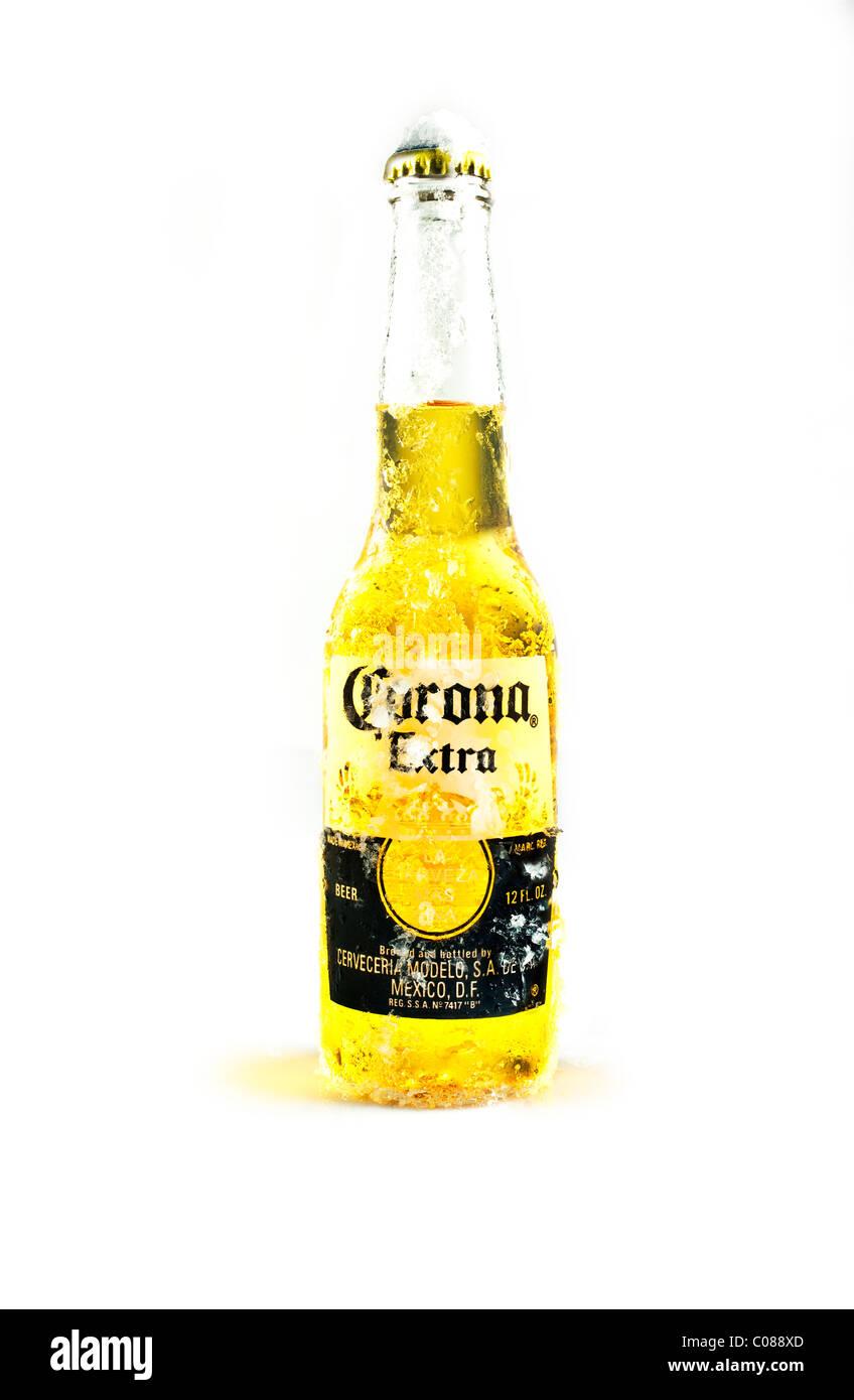 Una bottiglia di birra Corona su uno sfondo bianco. Immagini Stock
