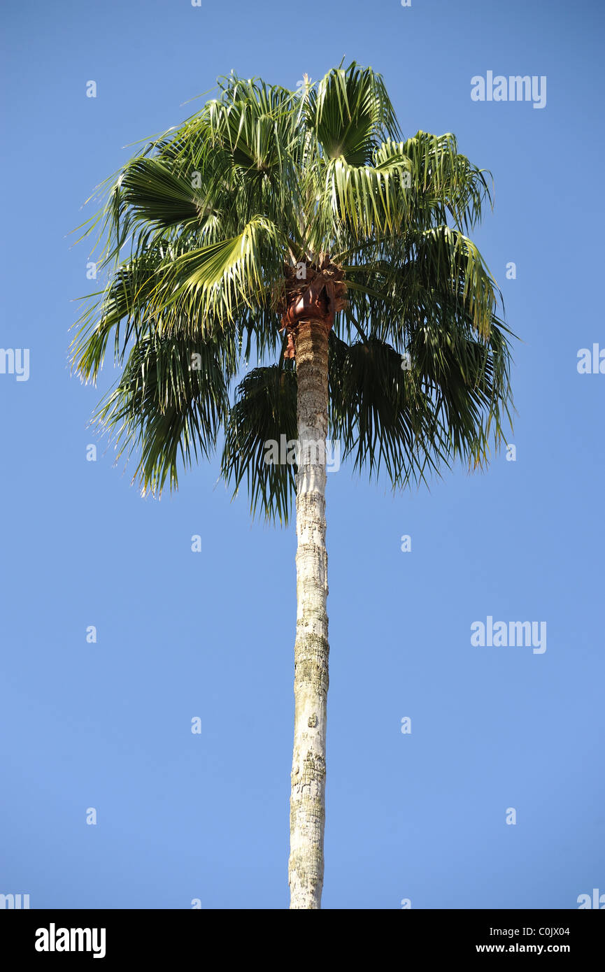 Palm Tree Immagini Stock