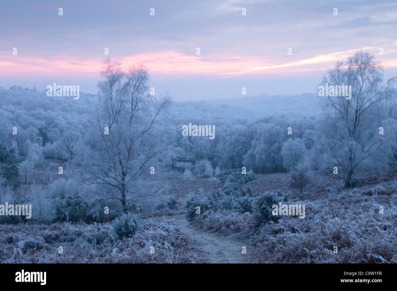 Vista est su woolbeding comune, west sussex, Regno Unito. trasformata per forte gradiente frost. gennaio. Tramonto. Immagini Stock