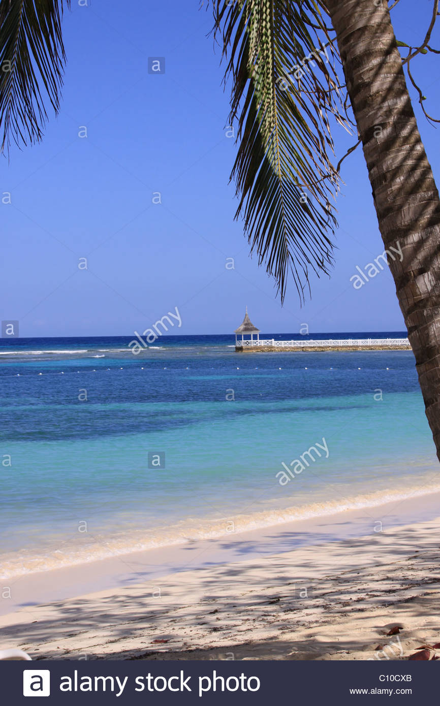 Sulla spiaggia sull 39 oceano mare palm tree vacanza - Soleggiato in inglese ...