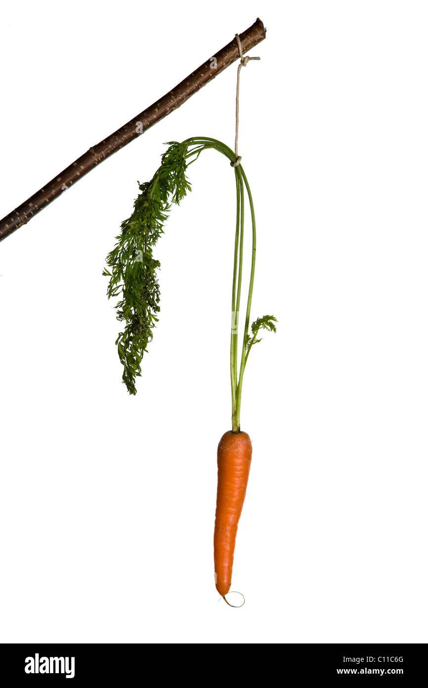 La carota di motivazione Immagini Stock