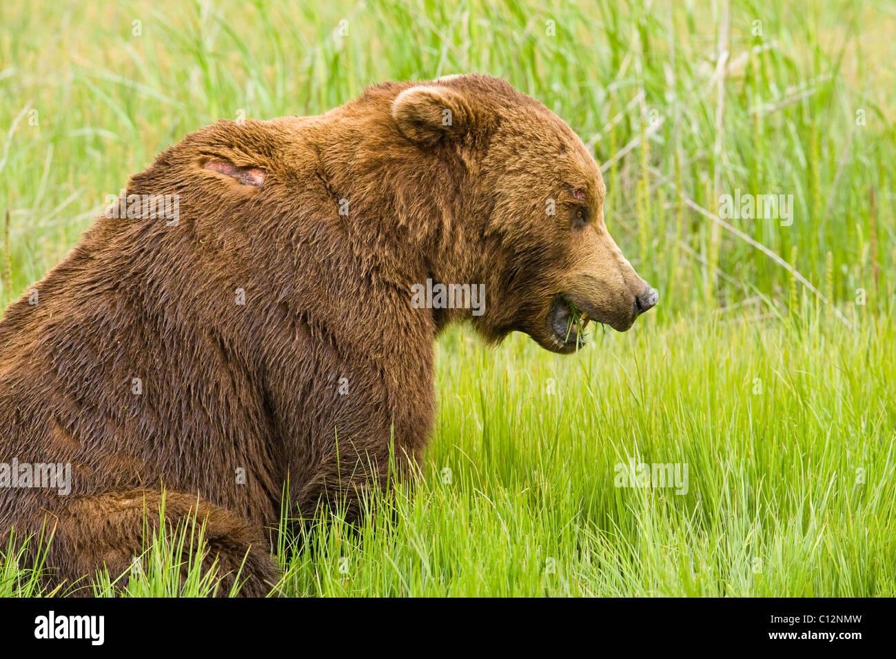 Datazione Kodiak Alaska