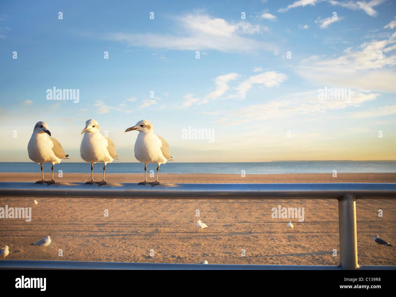 Stati Uniti d'America, New York City, Coney Island, tre gabbiani appollaiato sulla ringhiera Immagini Stock
