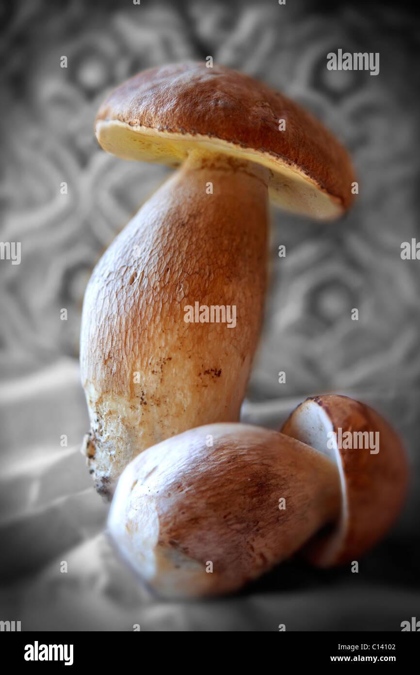 Tutto selvatici freschi di funghi porcini Foto Stock