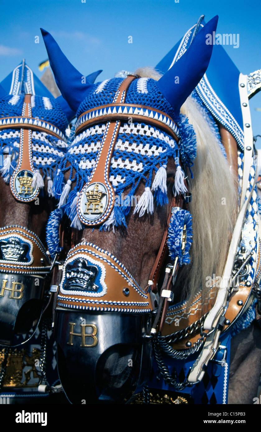 Adornata di cavalli, Oktoberfest Monaco di Baviera, Germania Immagini Stock