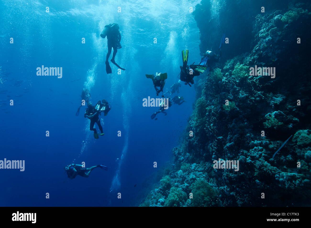 Gli indisciplinati, caotico scuba diver group al Coral reef, Hurghada, fratello isole, Mar Rosso, Egitto, Africa Immagini Stock