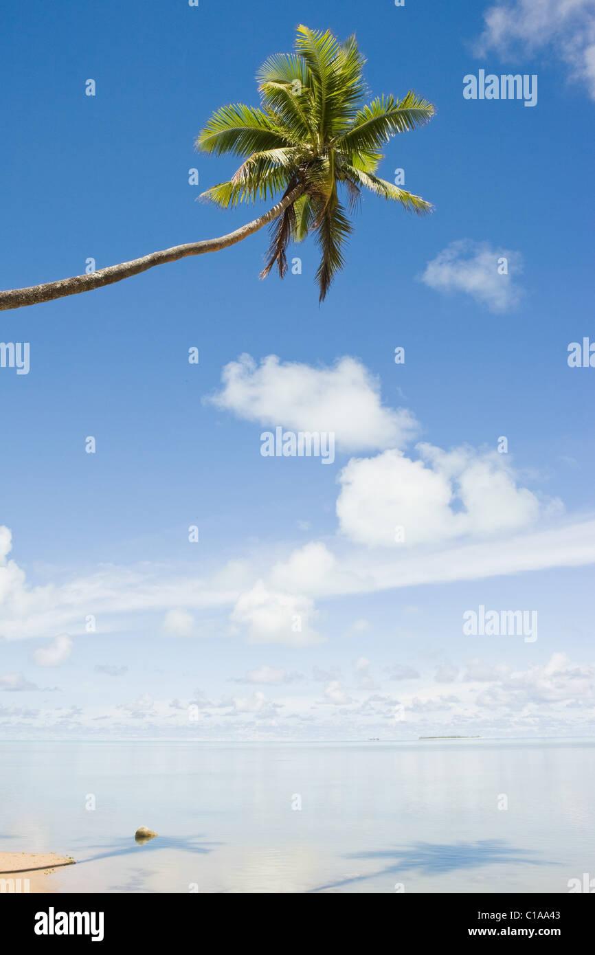 Spiaggia e unico Palm tree Immagini Stock
