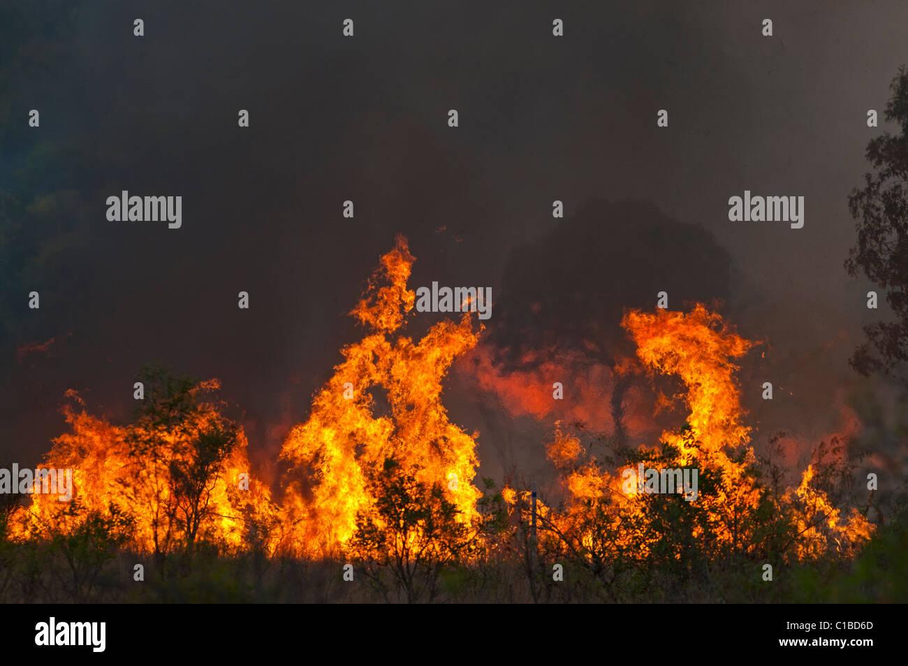Bush fire nel Queensland Austtralia Immagini Stock