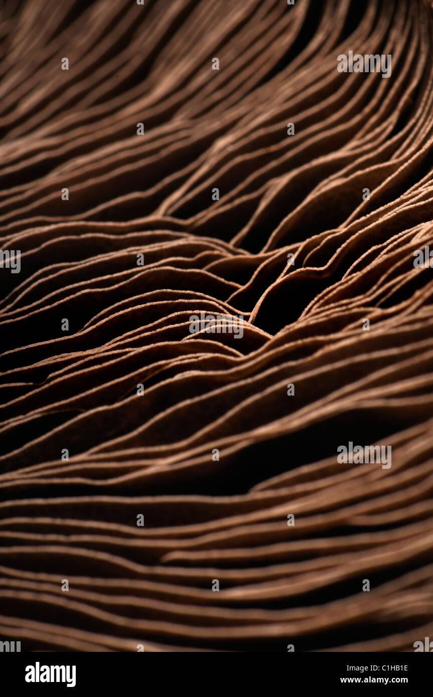 Campo grande fungo - parte inferiore mostra spore Immagini Stock