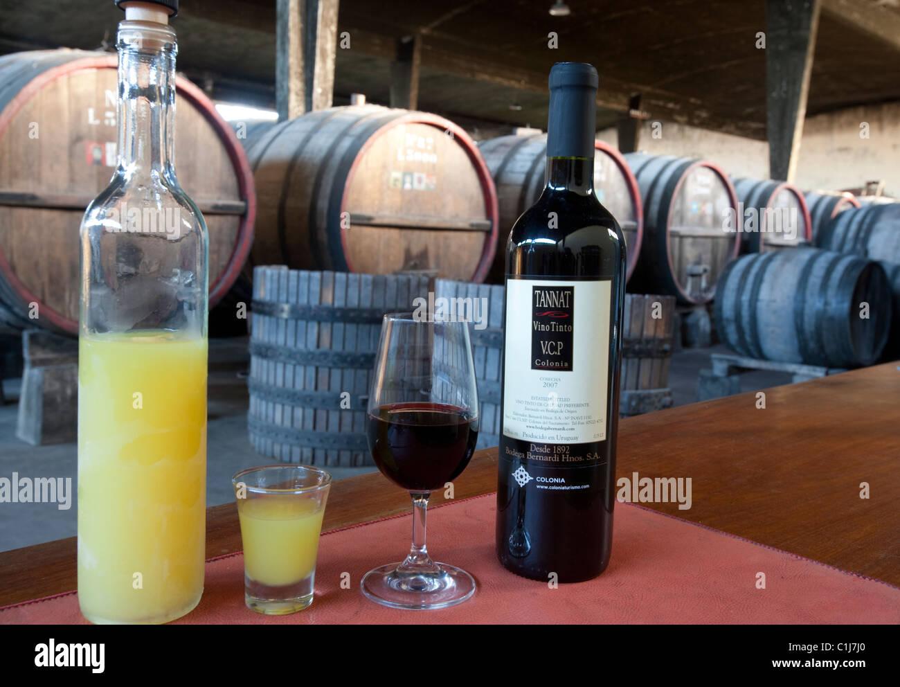 Il Limoncello alla Grappa & Tannat vino rosso, Bernadi Cantina, Colonia del Sacramento, Uruguay Sud America Immagini Stock