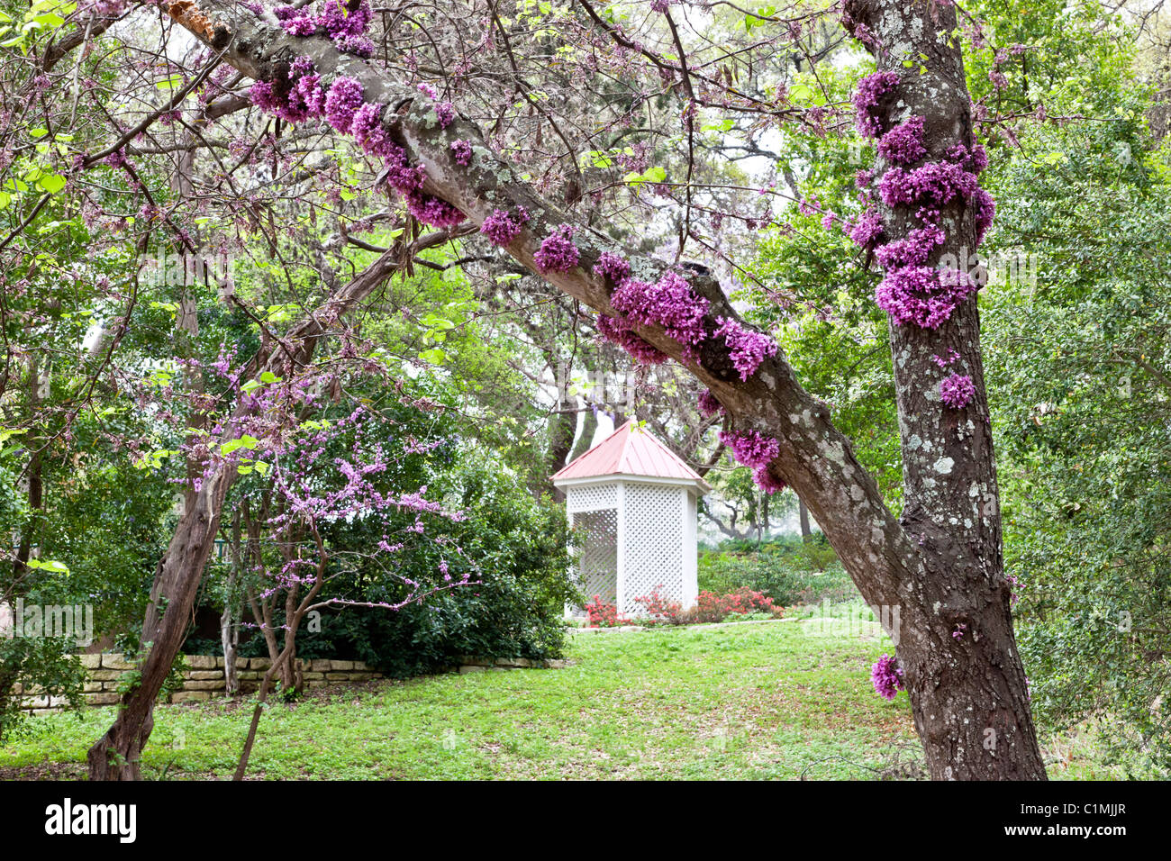 Zilker Giardino Botanico Immagini Stock