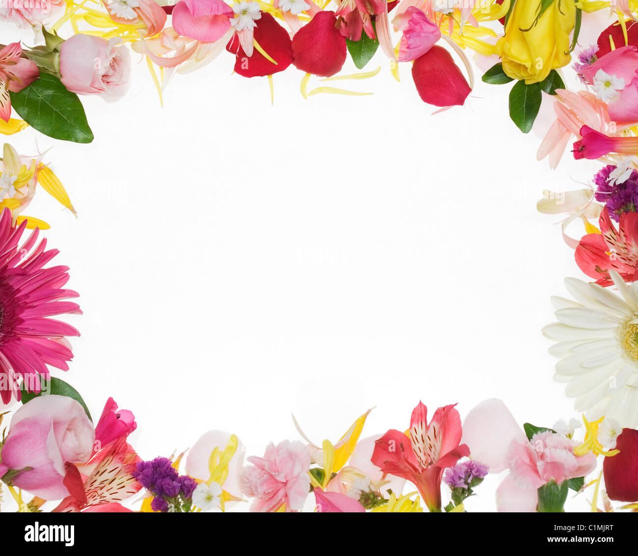 Confine di fiori su sfondo bianco Foto Stock